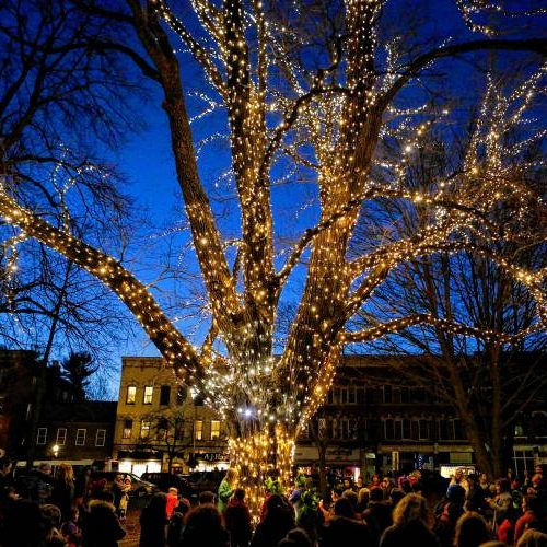 A maple tree illuminates Amherst's town center Dec. 2, 2016 during the Merry Maple Festival and Tree Lighting.